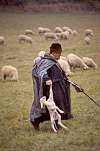 shepherd083
