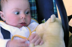 Baby_meets_stuffed_animal