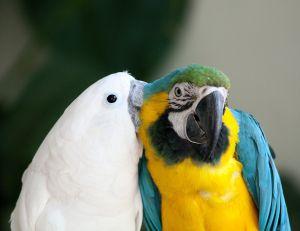 bird ruffling feathers