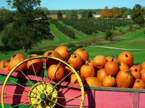 pumpkin-cart-630567-m