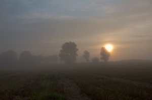 sunrise-over-the-field-1377784-m