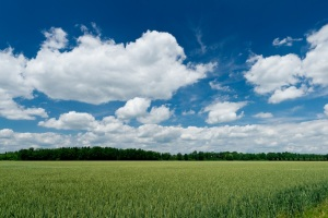 Simple Field