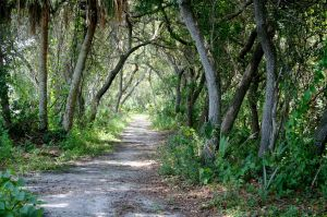 tangled-pathway-in-the-woods