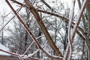 tree-branches-1438732-m