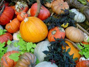 pumpkins-912529-m