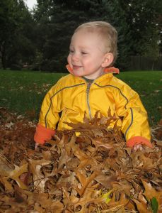 toddler-in-leaves-631626-m