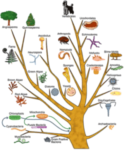 Evolution_tree_of_life