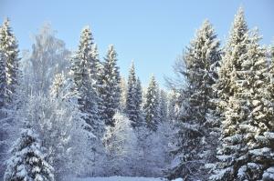 winter-1419055-m