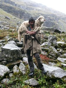 Shepherd_on_the_way_to_Hampta_Pass