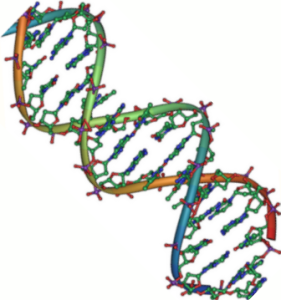 Structure of DNA double helix