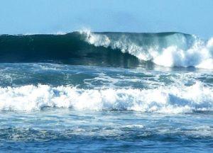 Hawaii_surf_fws
