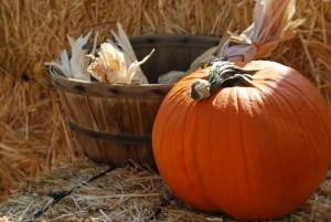 pumpkin-patch-3-1367968-m