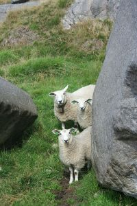 ThreeSheep