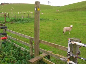Wolds_Way_Stile_-_geograph.org.uk_-_285429